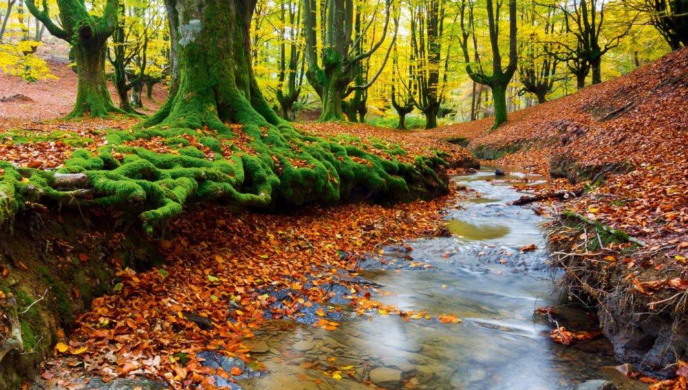 Parque Natural de Gorbeia, País Vasco