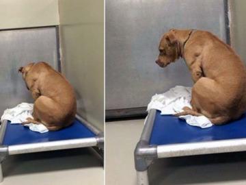 March, el perro que se deprimió por no ser adoptado