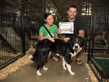 Un evento de adopción de animales consigue que 524 perros y gatos encuentren un nuevo hogar