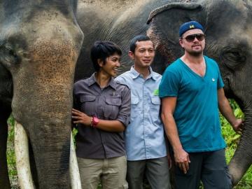 Leonardo DiCaprio, comprometido contra la caza furtiva de orangutanes y elefantes
