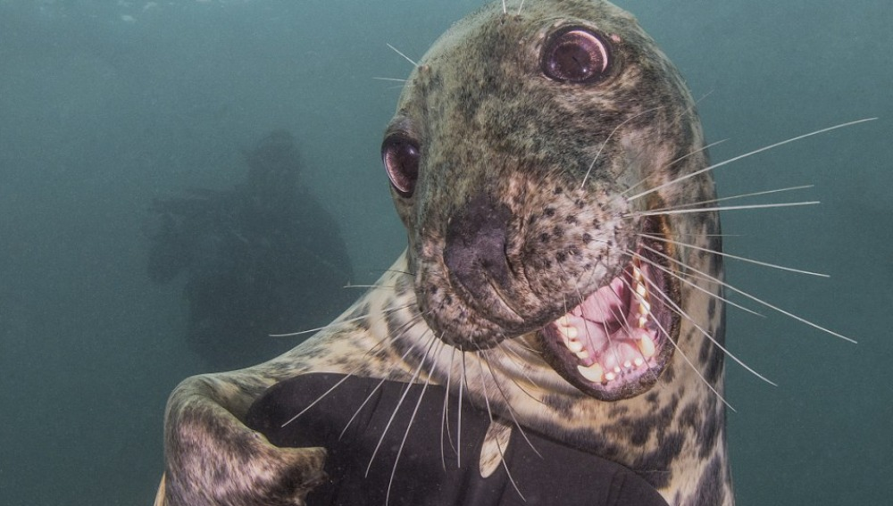 Conoce a la foca más simpática del Océano Atlántico