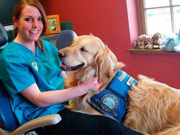 Jojo, el perro que ayuda a calmar a los niños en la consulta del dentista