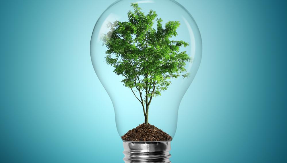 La energía que procesan las plantas podría abastecer electricidad a los hogares