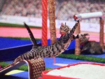 Llegan los Juegos Olímpicos para gatos, una iniciativa solidaria para fomentar la adopción