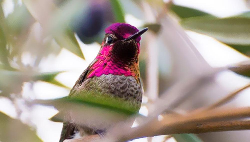 La encantadora belleza de los colibríes captada por una usuaria de Instagram