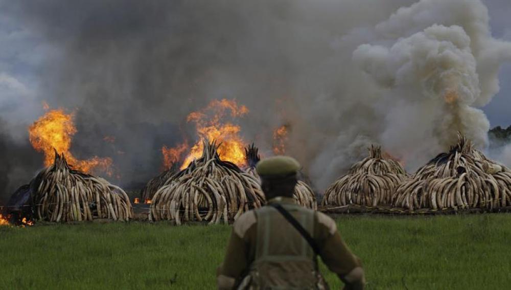 Kenia quema 105 toneladas de marfil para combatir el narcotráfico