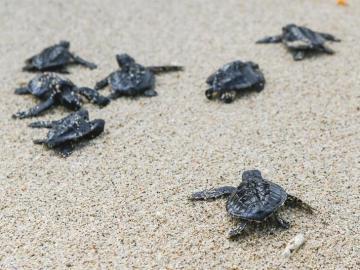 La tortuga del mediterráneo, amenazada por la construcción y los pesqueros
