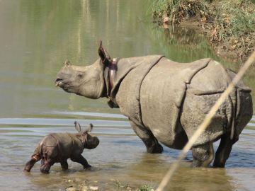 El rinoceronte recién nacido con su madre