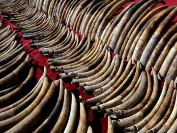 WWF lanza una campaña para combatir el tráfico ilegal de especies