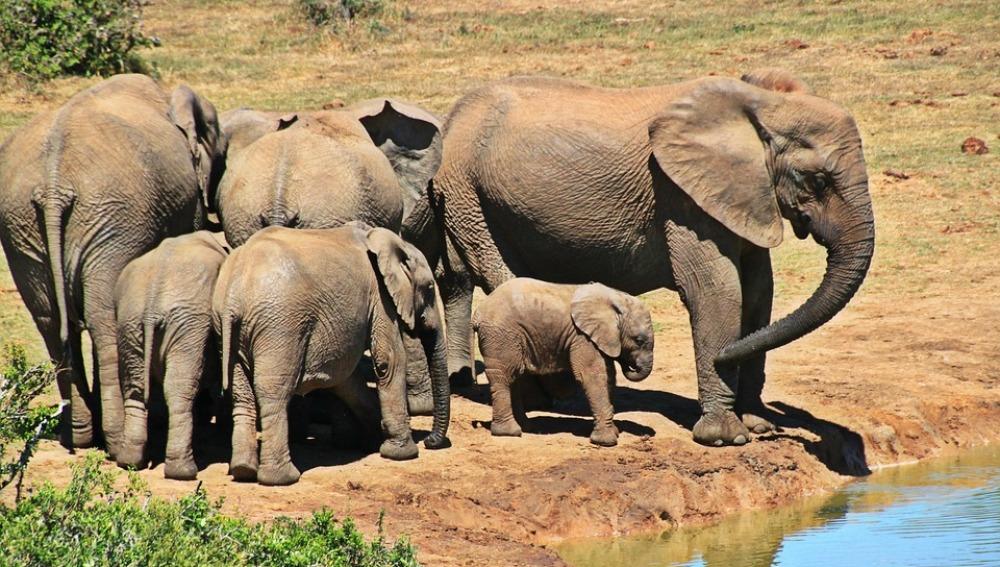 Elefantes en el Parque Kruger de Sudáfrica