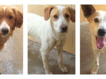 Atresmedia y sus voluntarios colaboran con la protectora ANAA y apadrinan tres perros
