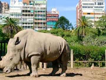 El Zoo de Buenos Aires comienza su transformación para convertirse en un parque ecológico