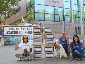La Comunidad de Madrid aprueba la ley de protección animal #SacrificioZero