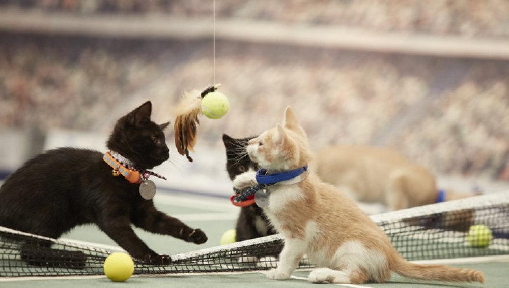 Juegos Olímpicos para gatos