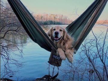Planazo para este verano:  ir de camping con tu perro
