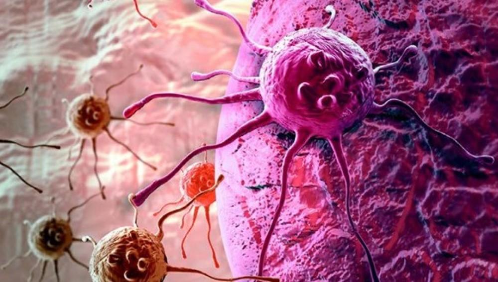 Investigadores del CNIO hallan el mecanismo que permite al cáncer sobrevivir sin glucosa