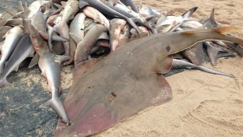 Peces muertos en la orilla