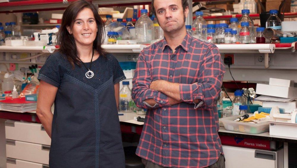 Investigadores del CNIO hallan un gen esencial para la copia del ADN