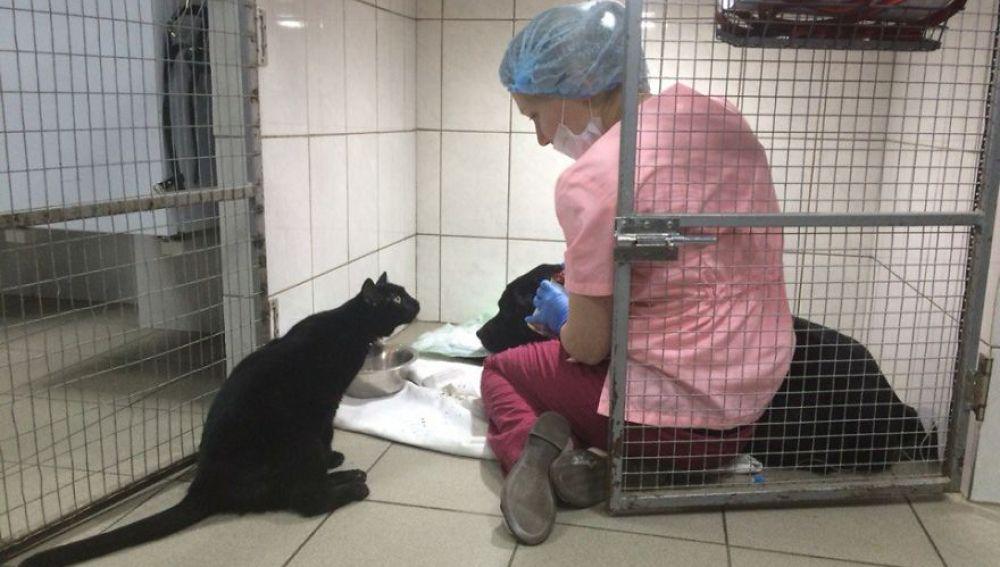 Lucifer, el gato enfermero que no puede caminar y cuida a otros animales