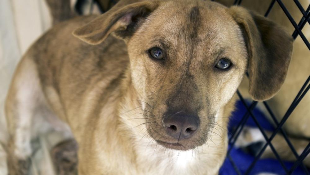 Comparte con nosotros una foto de tu perro adoptado