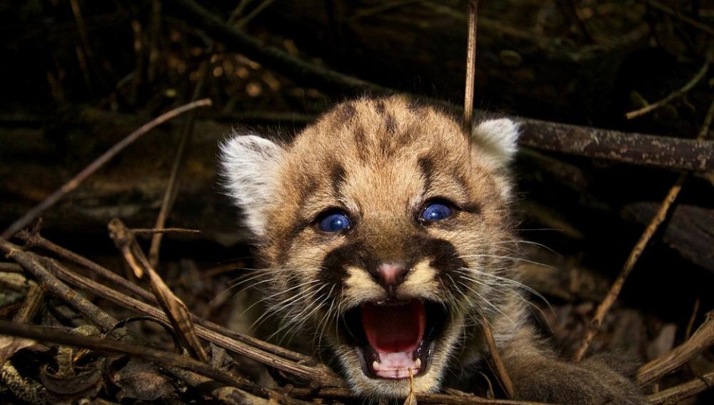 El Zoológico de Nicaragua exige recursos para cuidar y proteger a 1000 animales refugiados
