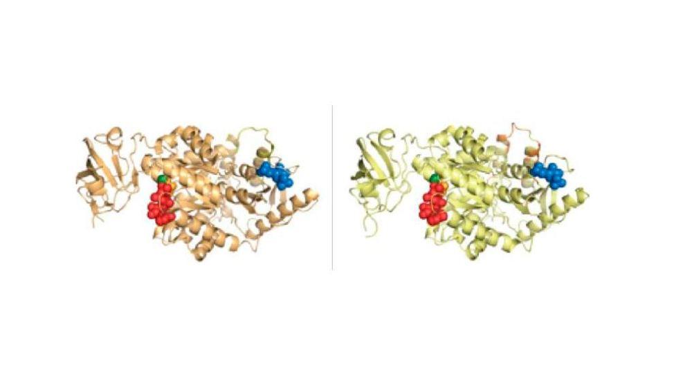 Investigadores del CNIO desmontan uno de los mitos de la innovación biológica