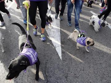 Más de 3.500 perros y sus compañeros humanos corren en el Perrotón 2016