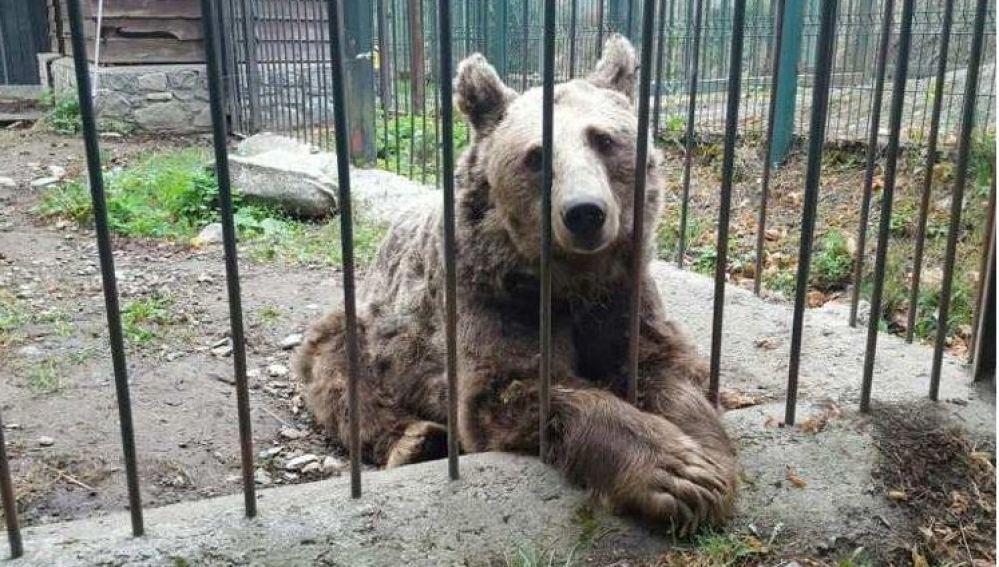 Mimo y Arán, los dos osos de Arties que vivían en cautiverio, llegan al santuario de Hungría