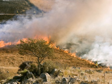 África es el continente más afectado por los incendios
