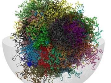 Desarrollan un modelo informático en 3-D del genoma humano