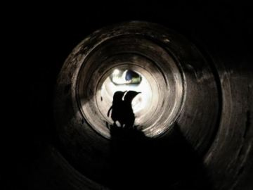 Nueva Zelanda construye un túnel para que los pingüinos puedan llegar hasta sus nidos