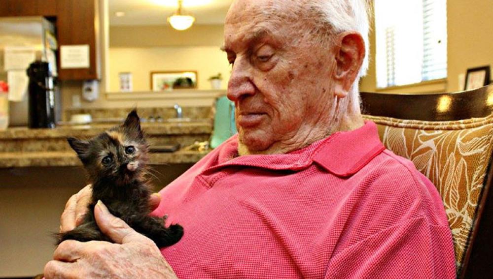 Los ancianos de una residencia proprocionan cariño y cuidados a gatitos abandonados