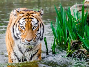 Los animales estarán protegidos gracias al acuerdo internacional de la ONU