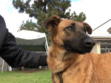 Una familia acude a un refugio para adoptar a una nueva mascota y se encuentran al perro que habían abandonado