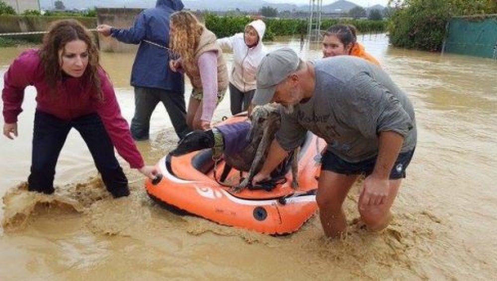 Las protectoras de animales de Málaga han pedido ayuda tras las últimas inundaciones