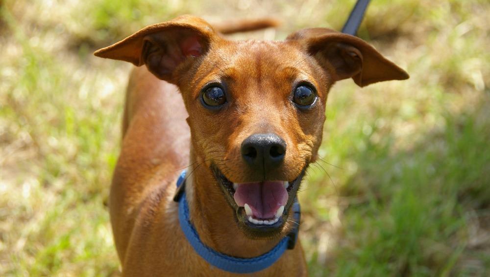 Terránea ofrece seguros gratis para fomentar la adopción de perros