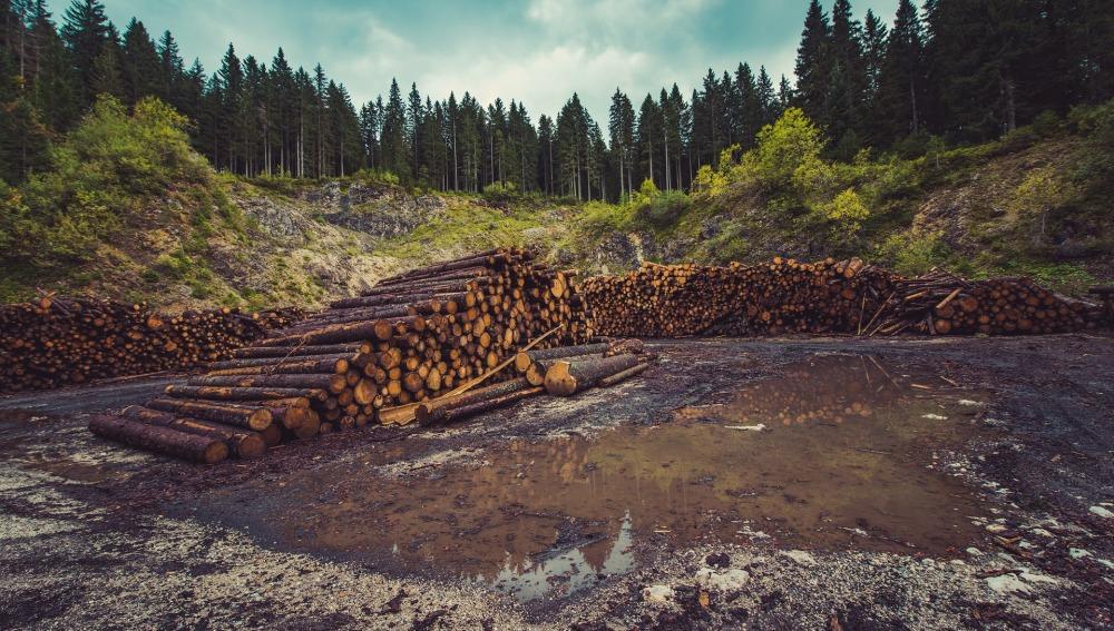 La destrucción del medio ambiente puede propagar enfermedades a los humanos