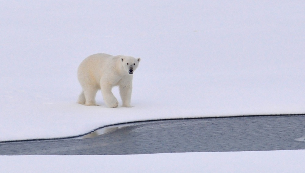 Nuevo record histórico del deshielo y el aumento de temperatura en el Ártico