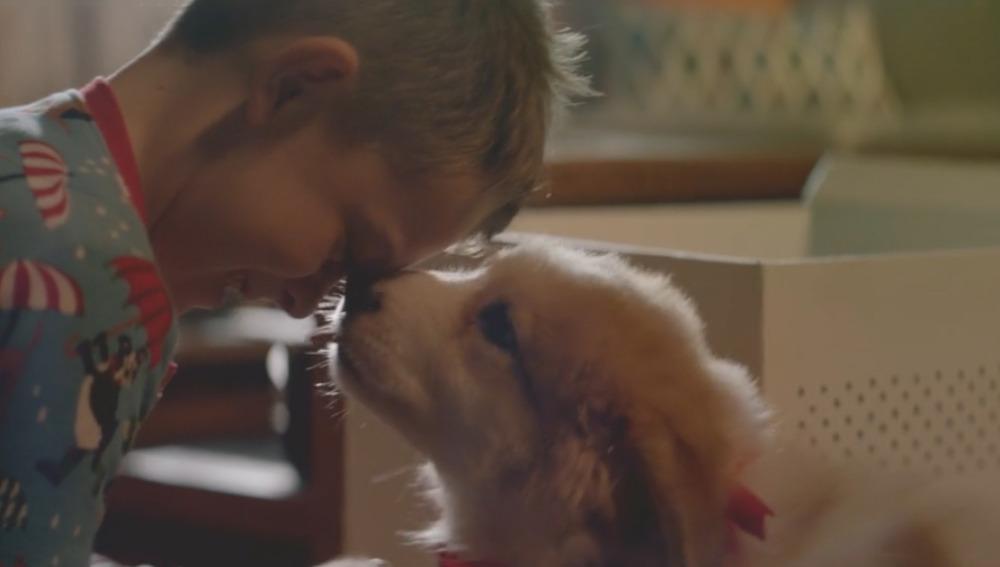 Este vídeo recuerda que las mascotas #NoSonUnJuguete y promueve la responsabilidad antes de adoptar una