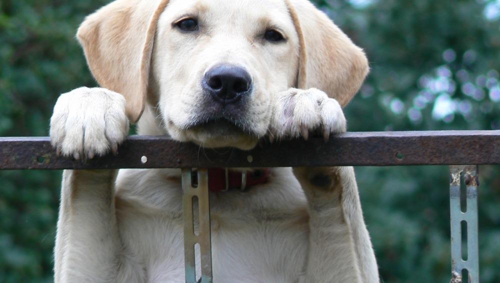 ¿Dónde puedes adoptar una mascota en España?