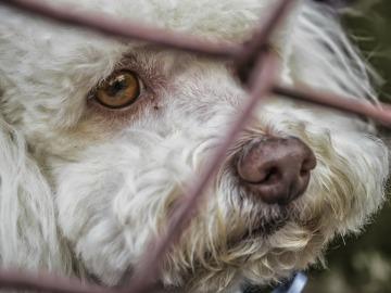 Estas son las multas por abandono animal en las distintas comunidades de España