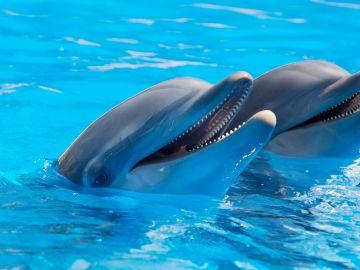Dos delfines en el Zoo