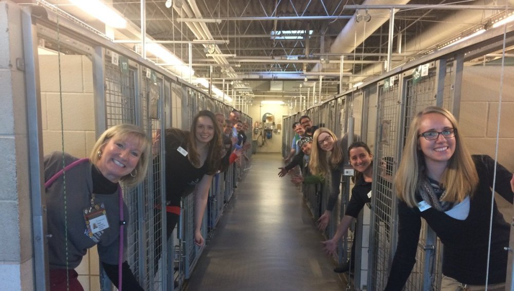 Un refugio de animales celebra que todos sus perros y gatos han sido adoptados antes de Navidad