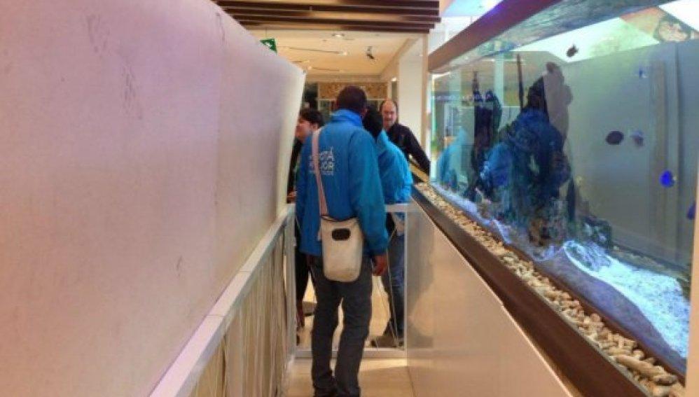 Incautan 40 animales marinos que malvivían en un centro comercial de Bogotá