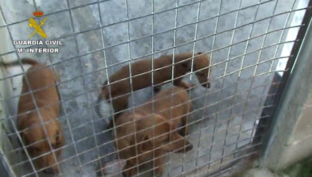 Rescatan a más de 150 perros de un criadero ilegal en Madrid