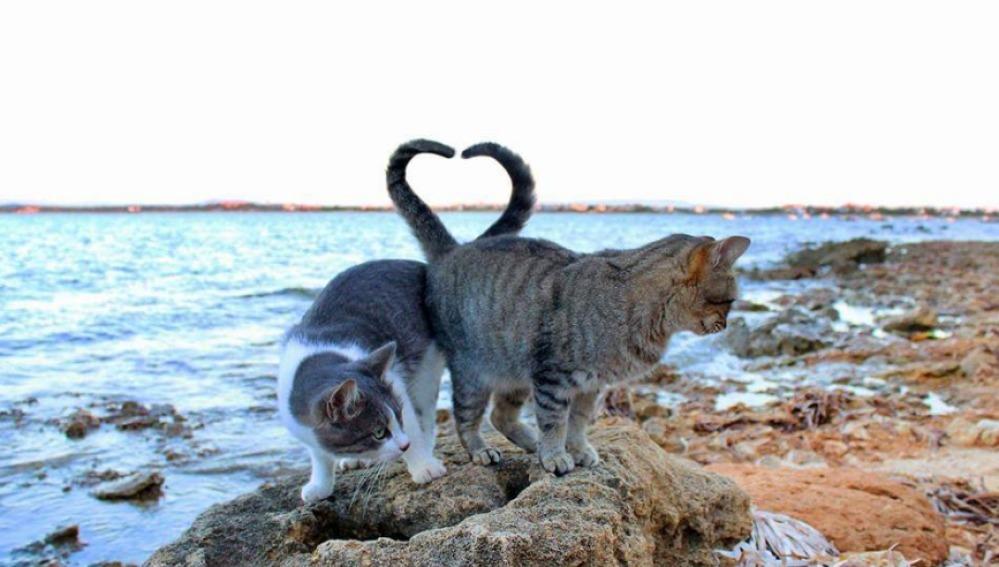 La playa de los gatos, un paraíso para los amigos felinos