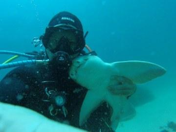 Un tiburón busca a un buceador para que lo abrace cada vez que se sumerge