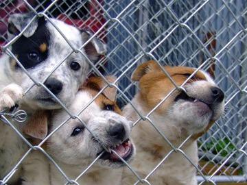 El Seprona aumenta las actuaciones contra el maltrato animal respecto al 2015