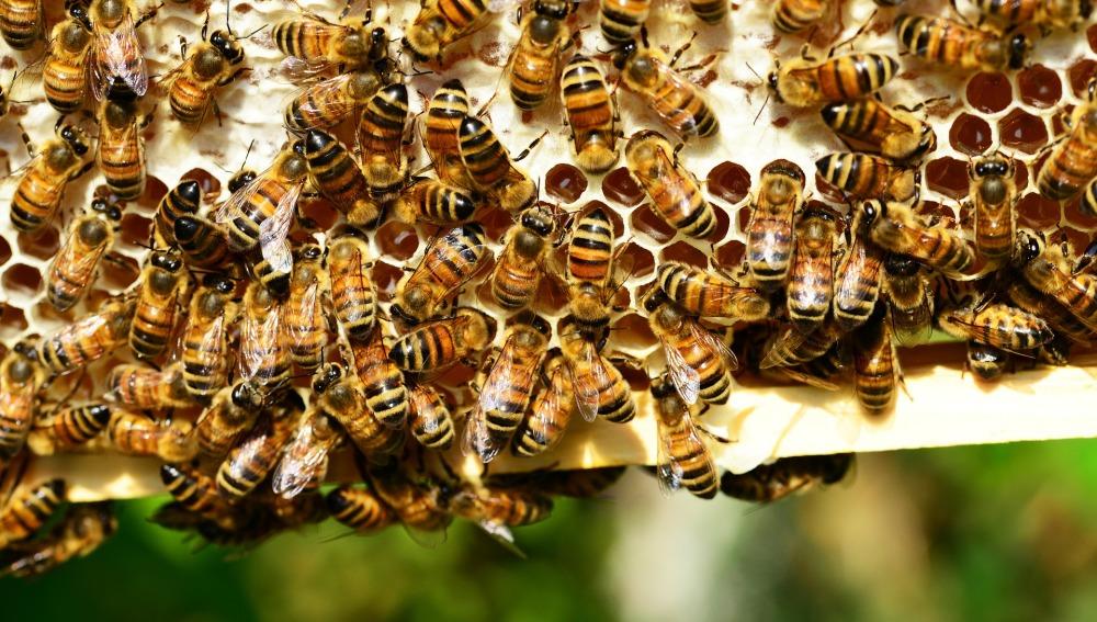 España es el país más beneficiado por las ayudas comunitarias a la apicultura