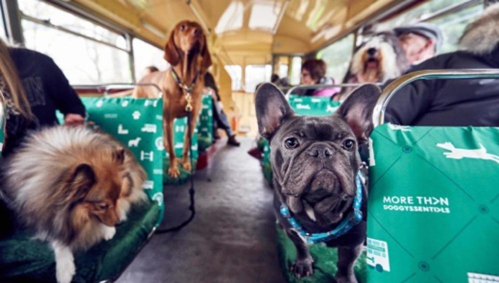 Un autobús para perros les lleva en una visita guiada por la ciudad de Londres